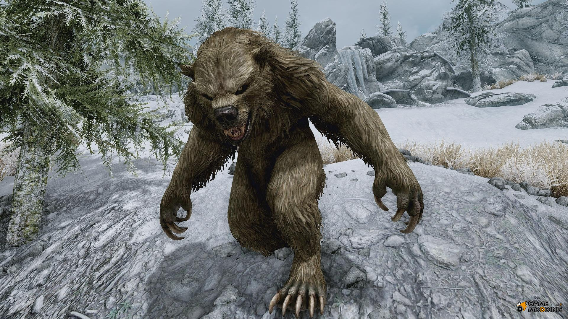 Where to find bears in skyrim